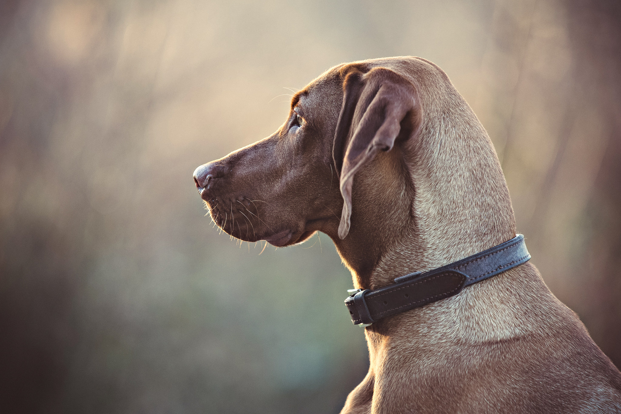 Dog-Portraits-Outdoors-In-Berkshire