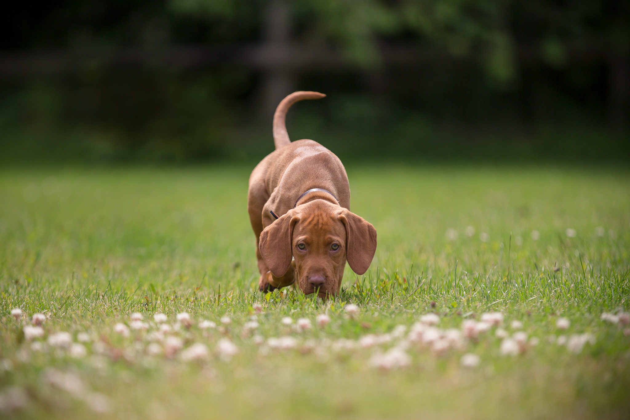 Dog-Photography-Of-Puppy-In-Berkshire