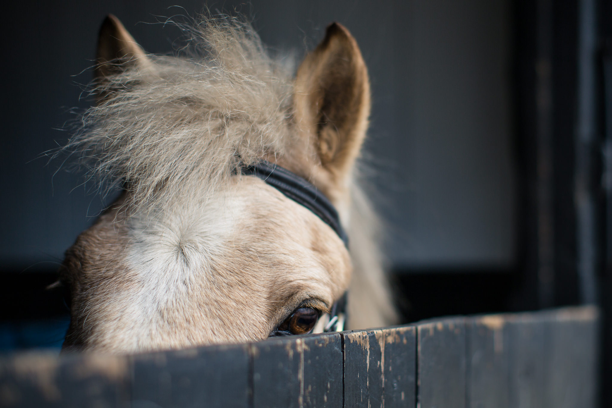 Horse-Photography-In-Hand-Portraits-Hampshire