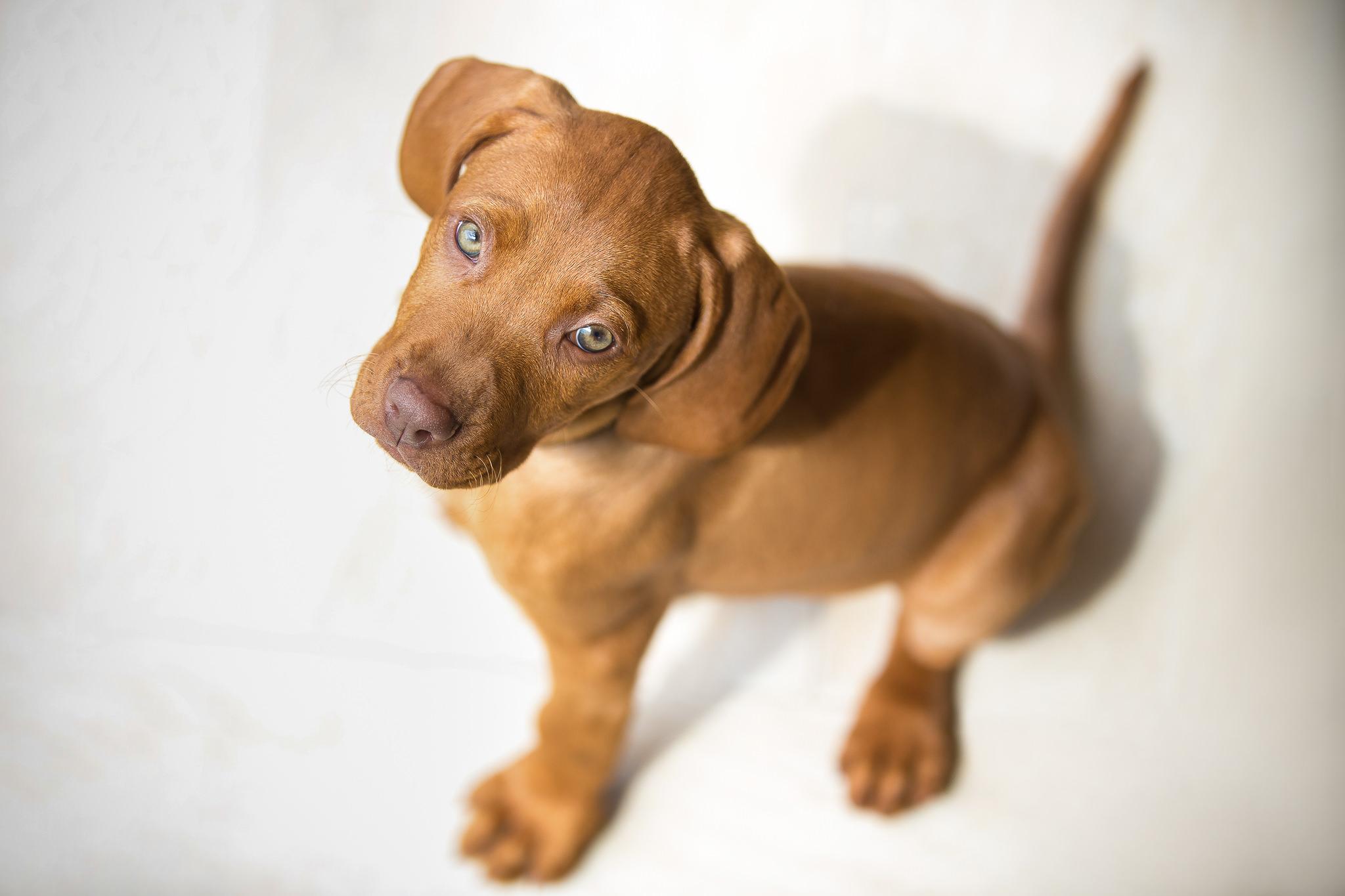 Indoor-Puppy-Portrait-In-Hampshire