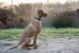 22-gun-dog-photogrpahy-dog-photographer-berkshire