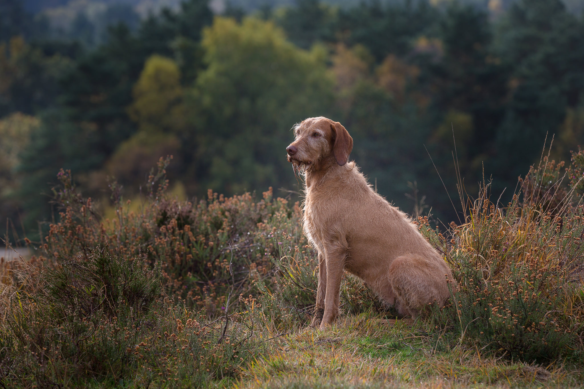 Dog-Photography-In-Hampshire