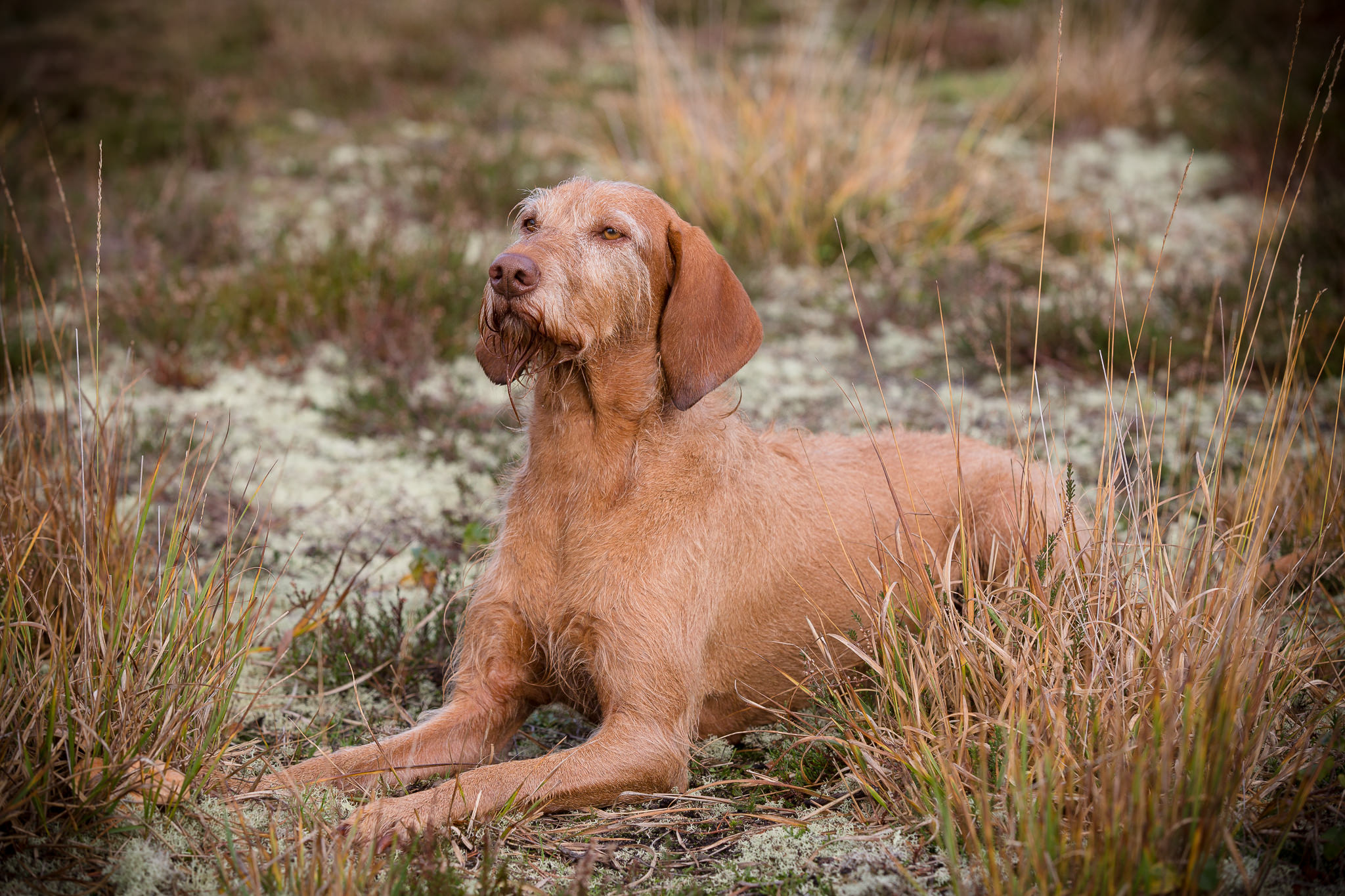 Outdoor-Dog-Photography-Hampshire