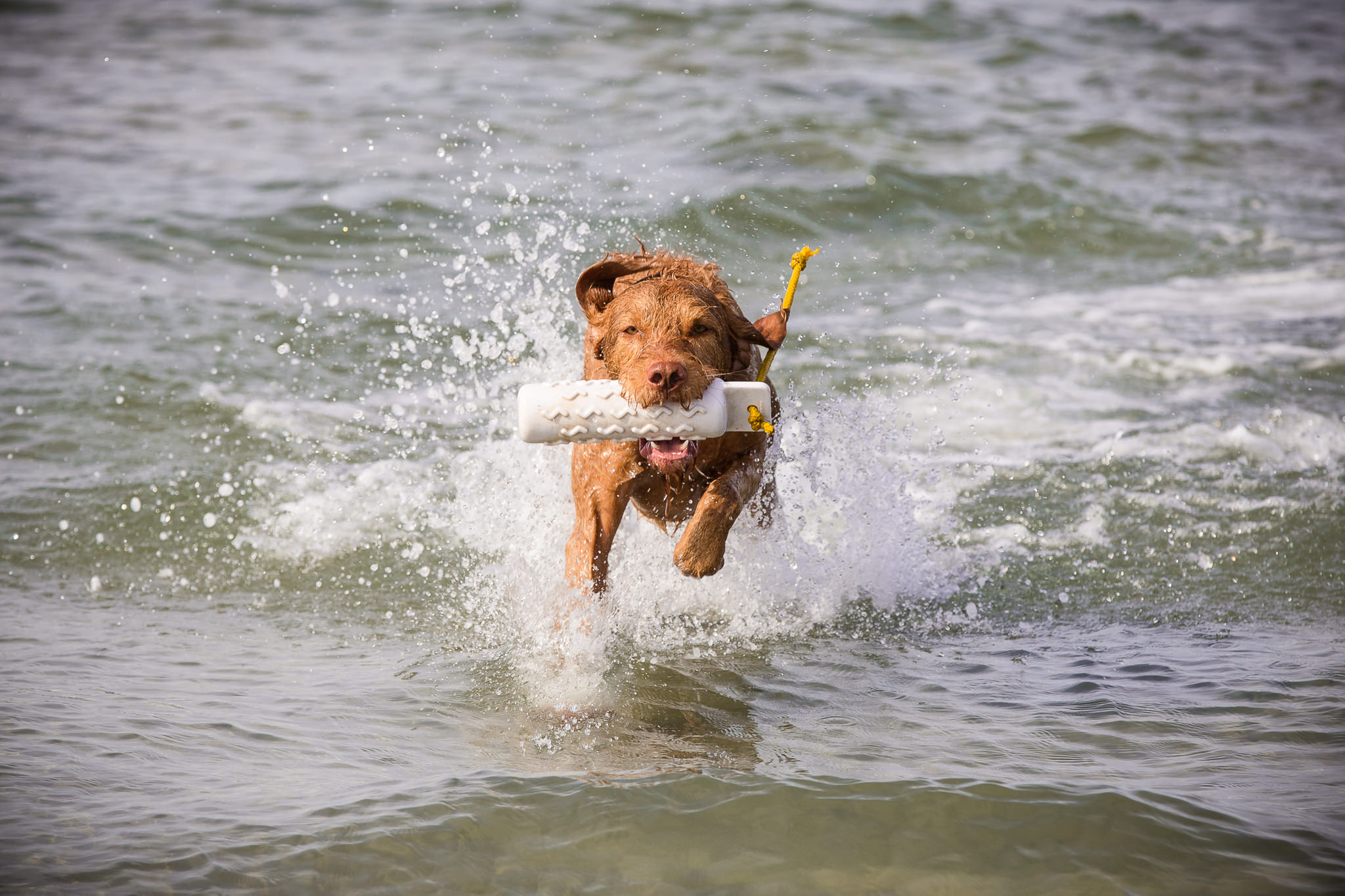 Dog-Photography-In-The-Sea