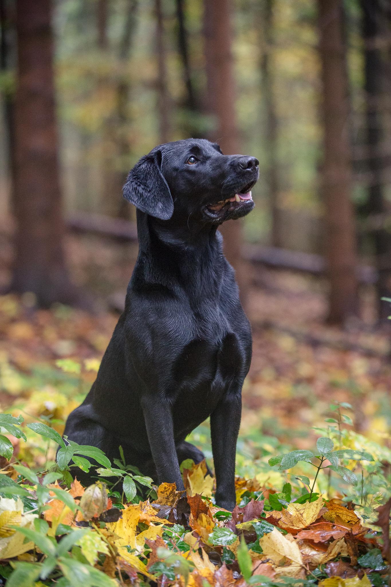 specialist gun dog photography berkshire