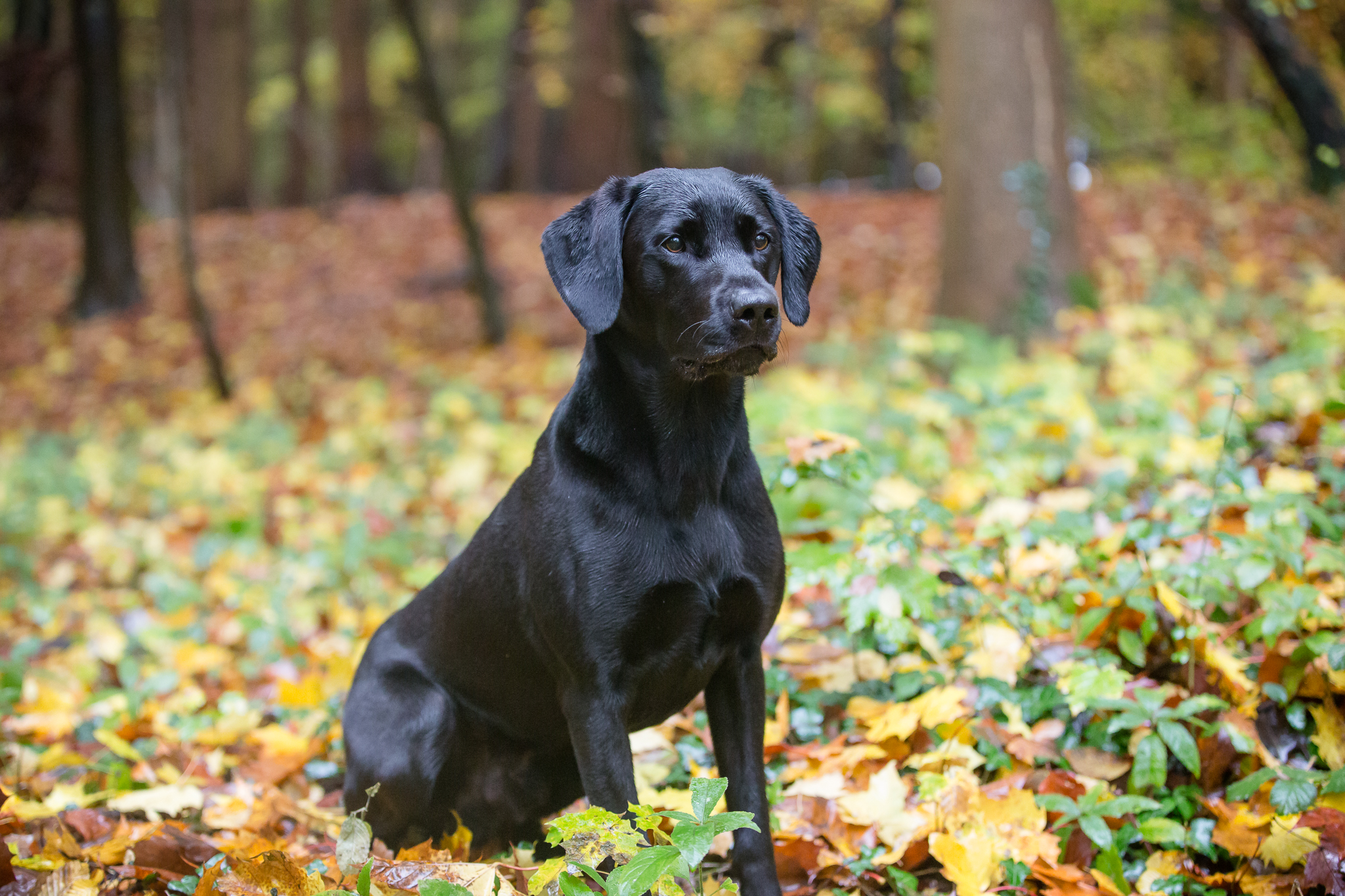gun dog photography gift vouchers