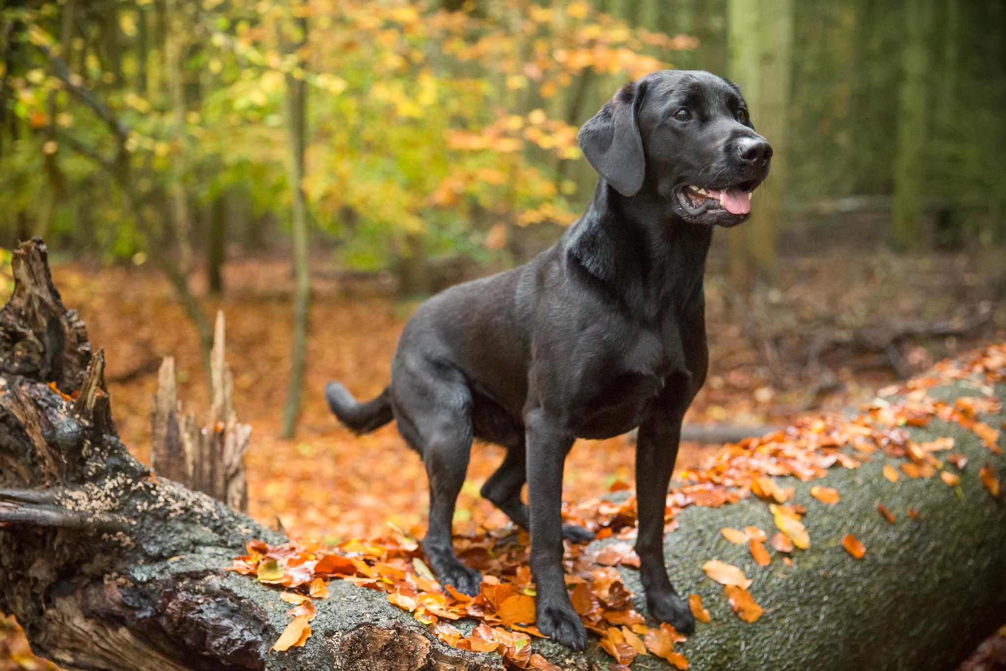 professional pet dog photography