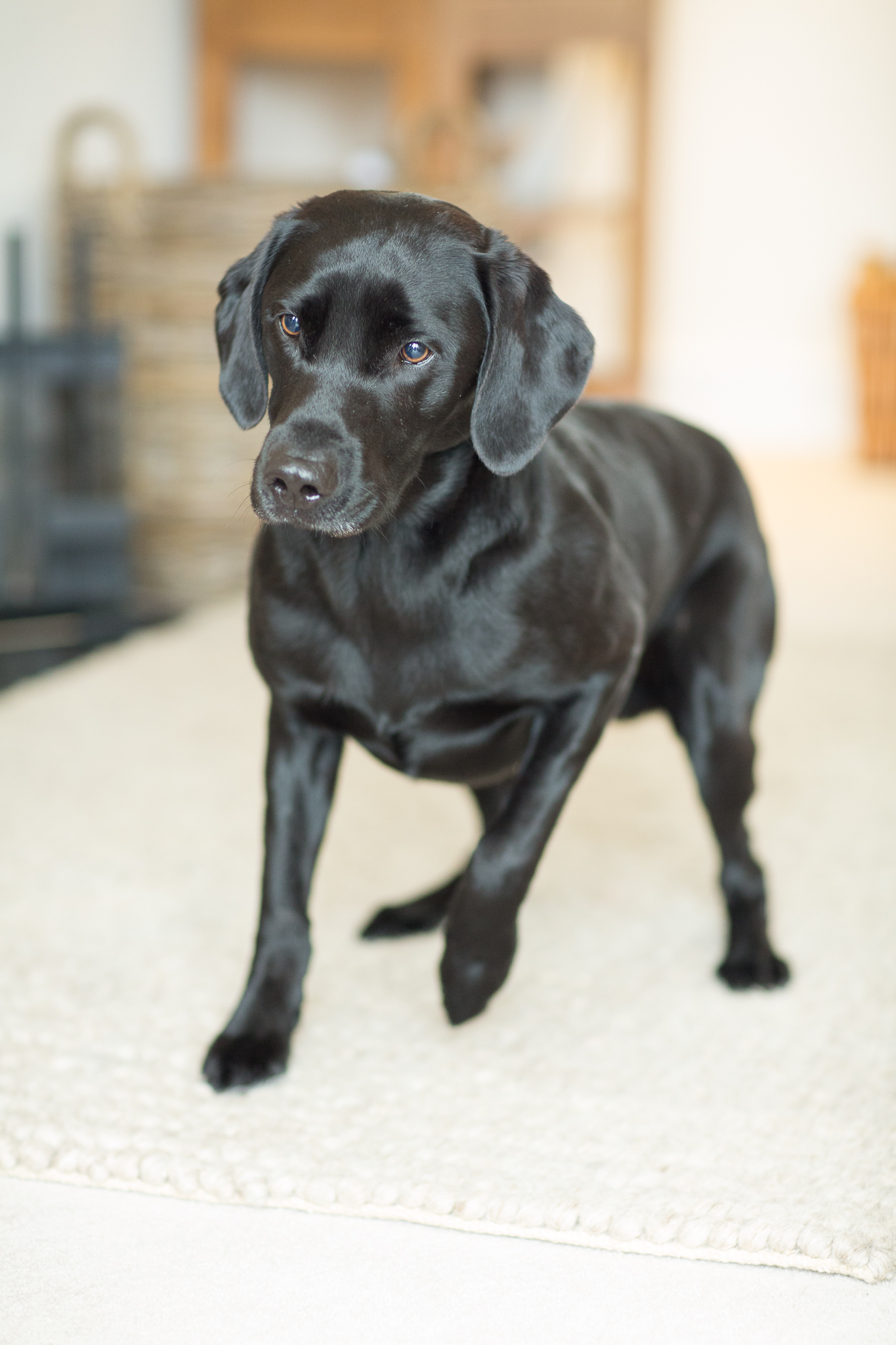 professional pet portraits berkshire and hampshire