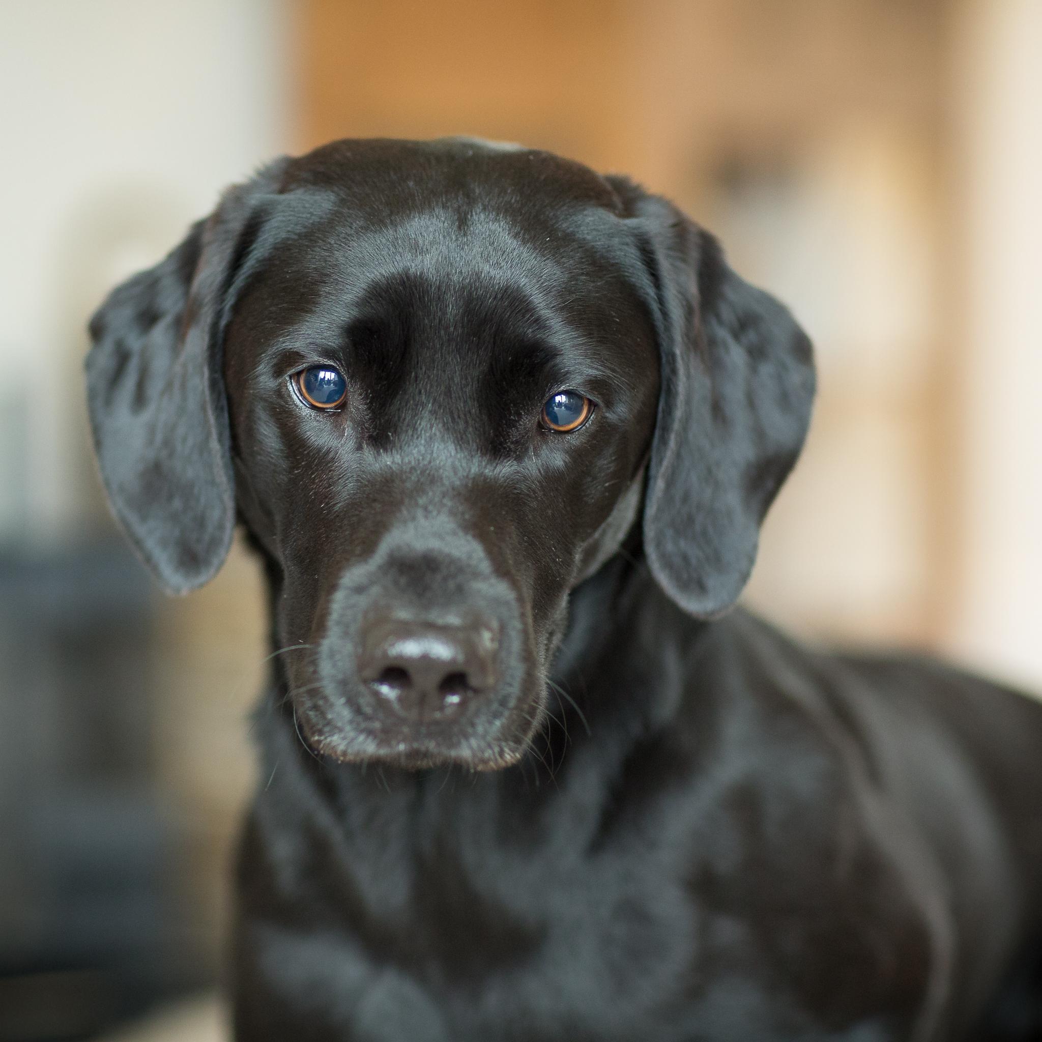 professional pet portrait gift voucher